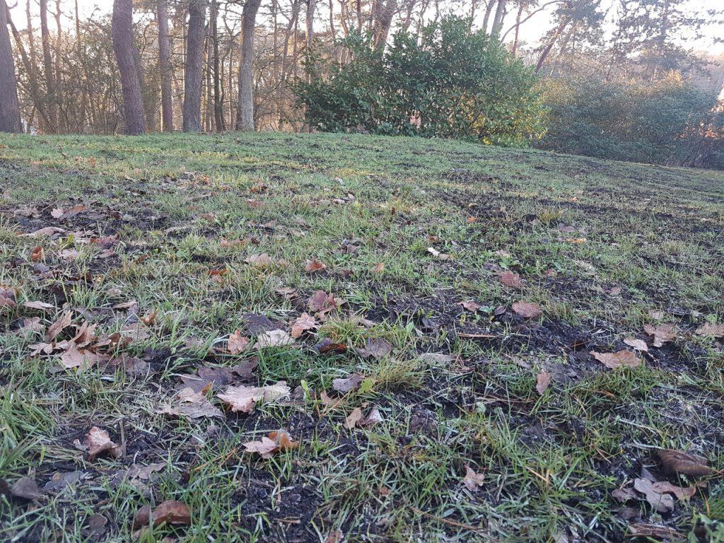 Het gras komt vlotjes terug door de compost piepen.