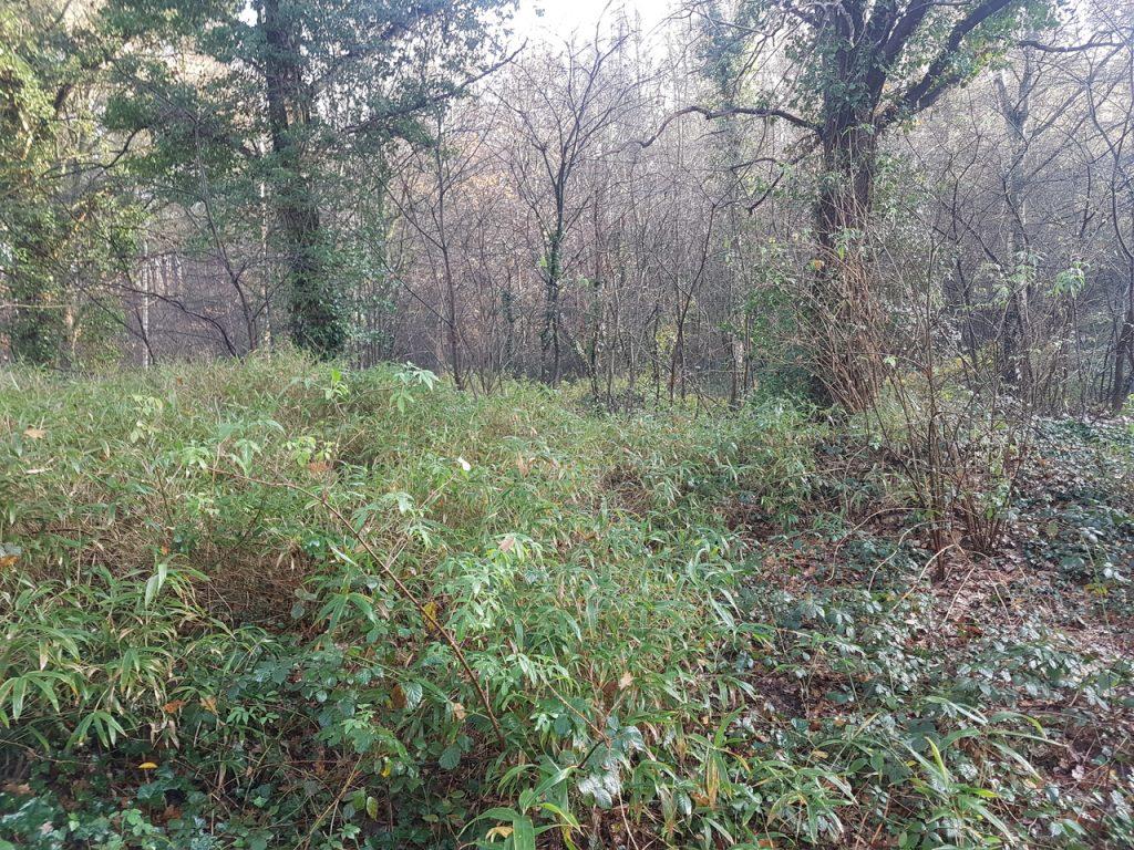 Bos voor de opkuis